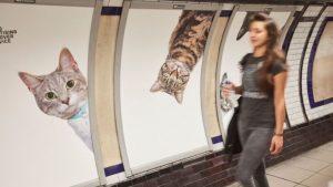 cats-on-the-tube